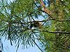 Pine cone   Stock Foto