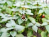 Photo 300 DPI: spider on web