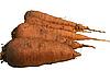 Świeże marchewki | Stock Foto