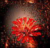 glowing red flower