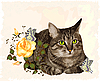 vintage greeting card with cat