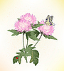 Vector clipart: pink asters and butterfly