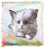 portrait of fluffy kitten with blue eyes