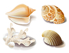 Vector clipart: set of seashells and coral