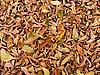 ID 3045397 | Herbstblätter | Foto mit hoher Auflösung | CLIPARTO