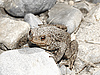 Photo 300 DPI: Toad