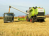 Photo 300 DPI: Harvester uploads the car with the wheat from the silo