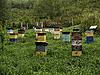 Photo 300 DPI: stationary apiary