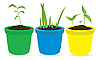 Vector clipart: Potted seedling
