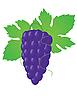 Vector clipart: Big grape