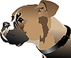 Vector clipart: Boxer dog head.
