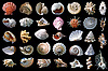 Photo 300 DPI: Shells