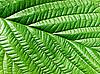 Green leaf | Stock Foto