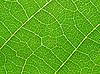 Leaf | Stock Foto