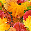 Autumn leaves seamless background | Stock Foto