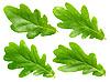 Oak leaves | Stock Foto
