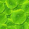 ID 3049317 | Grüne Blätter | Foto mit hoher Auflösung | CLIPARTO