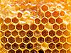 Фото 300 DPI: пчелиные соты