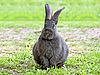 Rabbit | Stock Foto