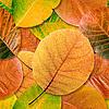Фото 300 DPI: бесшовный фон осенние листья
