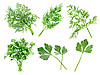 Parsley and dill | Stock Foto
