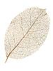 ID 3049421 | Dry leaf. | 高分辨率照片 | CLIPARTO