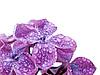 Liliowy | Stock Foto