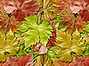 Vine leafage | Stock Foto