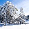 겨울 | Stock Foto