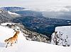 Photo 300 DPI: dog on mount