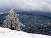 ID 3117852 | Kiefer im Schnee | Foto mit hoher Auflösung | CLIPARTO