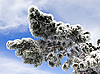 Pine tree in snow | Stock Foto