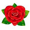 Красная роза в виде сердца