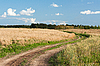 Landscape with road in field of the wheat | Stock Foto
