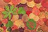 Photo 300 DPI: Autumn leaves background