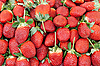 Ripe red strawberries   Stock Foto