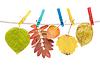 ID 3307726 | Herbst-Blatt auf Wäscheklammer | Foto mit hoher Auflösung | CLIPARTO