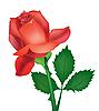 Vector clipart: Beautiful rose