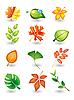 Векторный клипарт: листья