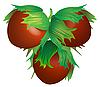 Vector clipart: Hazelnut