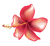 Vector clipart: Flower hibiscus