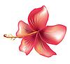 Векторный клипарт: Цветок гибискуса