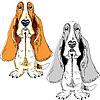 Векторный клипарт: Собака породы Бассет-хаунд