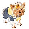 породистых собак йоркширский терьер