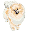Vector clipart: spitz dog smiles