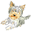 Vector clipart: pedigreed dog Yorkshire terrier