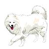 Vector clipart: purebred Samoyed dog smile