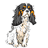 Dog Cavalier King Charles Spaniel | Stock Vector Graphics