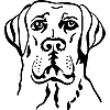 Vector clipart: dog breed labrador retriever