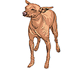 Vector clipart: Mexican Hairless Dog Xoloitzcuintle breed